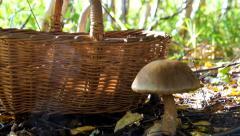 Mushroom-kicking Stock Footage