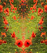 Abstract background for greetings in the form of heart with poppies (Valentin Stock Photos