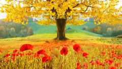 Beautiful autumn landscape with a lonely tree and poppies (meditation, harmon - stock photo