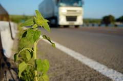 Sunflower on the road and a truck (delivery of goods, freight transportation - stock photo