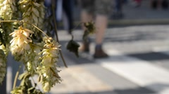 ZŽatec Hops and Beer Festival - Visitors  are going to Hop-Harvest Festival Stock Footage