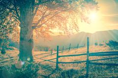Vintage autumn tree at sunset with sunbeams, mountains landscape Stock Photos