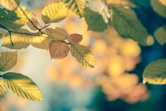 Autumnal leaf vintage background soft focus and color - stock photo