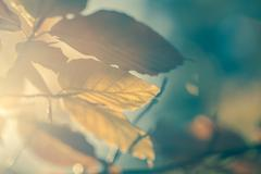 Autumnal leaves background vintage style Stock Photos