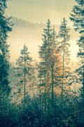 Wild forest in autumnal time vintage toned Stock Photos