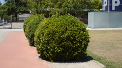 Trimmed Bushes Stock Footage