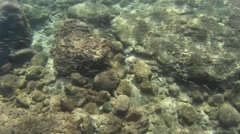Underwater life small fish Stock Footage