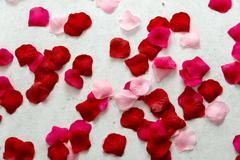 Imitation rose petals Stock Photos