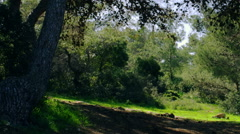 Royalty Free Stock Video Footage panorama of forested hillside shot in Israel at Stock Footage