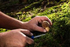 harvesting fungi - stock photo
