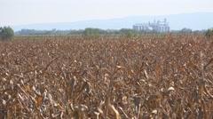 Grain silos in corn field Arkistovideo