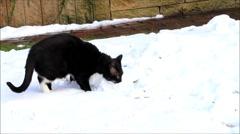 Black cat in snow Stock Footage