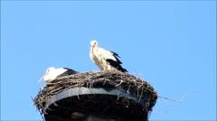 Pair storks in her nest, spring, springtime, summer, blue sky, space Arkistovideo