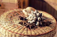 Shells and star anise - stock photo