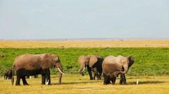 Elephants in Amboseli Park, Kenya Stock Footage