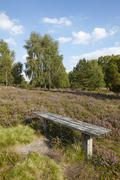 Luneburg Heath - Heathland Stock Photos