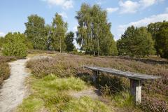 Luneburg Heath - Small path and bench in the heathland Stock Photos