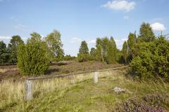 Luneburg Heath - Heathland - stock photo