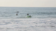 Dolphins swimming past surfers in ocean at Jeffreys Bay, South Africa Stock Footage