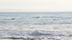 Dolphins swimming past surfers in ocean Stock Footage