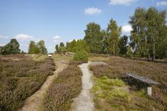 Luneburg Heath - Small path and bench in the heathland - stock photo
