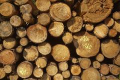 Luneburg Heath - Pile of tree trunks - stock photo