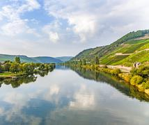 Vineyards at the hills of the romantic river Mosel edge in summer with fresh  Stock Photos