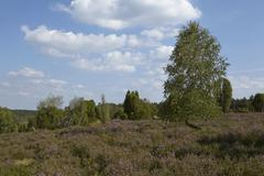 Luneburg Heath - Heathland with blue sky and white clouds Stock Photos