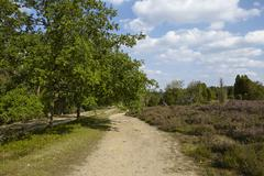 Luneburg Heath - Hike path - stock photo