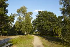 Luneburg Heath - Hike path with bench Stock Photos