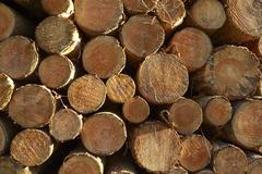 Luneburg Heath - Pile of tree trunks at sided light - stock photo