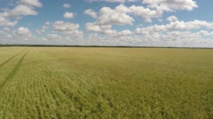 Flight over a crop harvest wheat field Stock Footage
