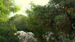 Video panorama of windy Carmel forest shot in Israel. Stock Footage