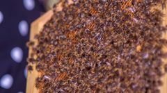 Stock Video Footage of Bees on the vector