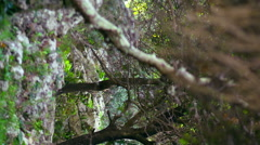 Video of rocky Carmel forest floor shot in Israel. Stock Footage