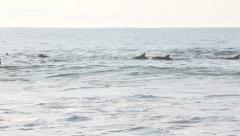 Dolphin pod swimming past surfers in ocean Stock Footage