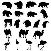 Set of bears, ape, penguins, camels and flamingos  silhouettes. Stock Illustration