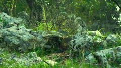 Stock Video Footage of Video of Carmel mountain forest shot in Israel.