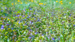 Green grass and flowers in the bright spring sunshine. - stock footage