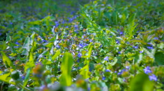 Green grass and lilac flowers in the bright spring sunshine. Stock Footage