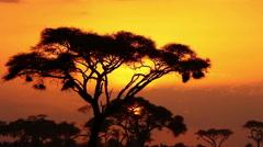 Time lapse Sunset in Amboseli Park, Kenya Stock Footage