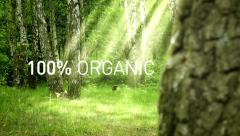 100% Organic. Green grass and tree in iluminated Forest Stock Footage