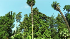 Tall palm trees in botanical garden Stock Footage