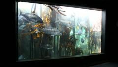Fish swimming in tank at Two Oceans Aquarium Stock Footage