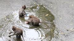 Monkey family at sacred monkey forest. Ubud, Bali, Indonesia Stock Footage