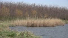 4K Beautiful lake autumn season dry reed empty tree branch nature idyllic pond - stock footage