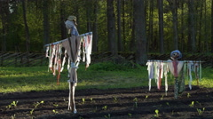 Scarecrows on the field Stock Footage