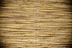 Reed Texture - stock photo