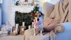 dog waiting look christmas  decorations interior - stock footage