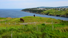Scenes of Newfoundland Stock Footage